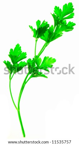 Isolated green plant on white brightly lit from behind - stock photo