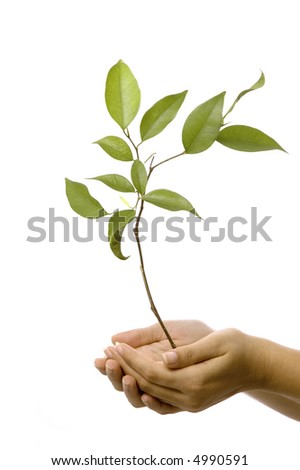 Isolated hands holding a new tree with green leaves - stock photo