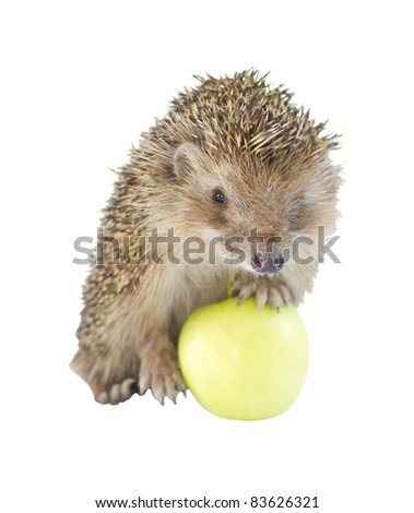 Isolated Hedgehog In Green Apple - stock photo