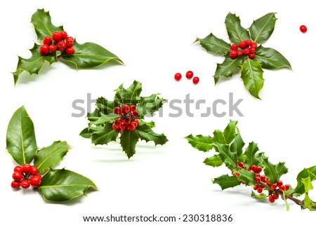 Isolated Holly Branch and Red Berries