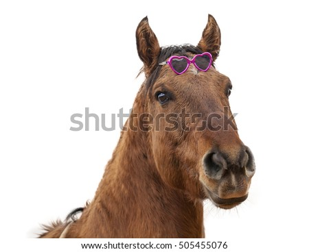 Isolated Horse On The Farm With Sunglasses
