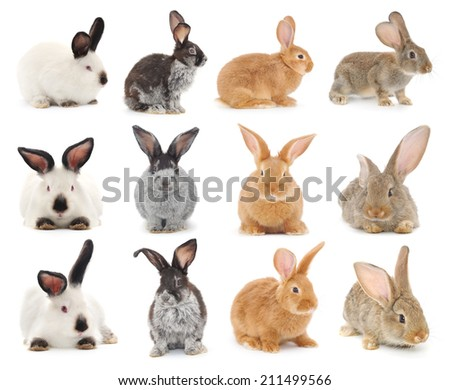 Isolated image of a colorful bunny rabbits. - stock photo