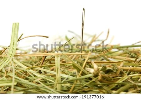 Isolated image of a needle in a haystack - stock photo