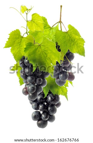 Isolated image of a vine on a white background