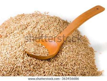 isolated image of barley close-up - stock photo