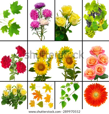 Isolated image of different flowers  - stock photo