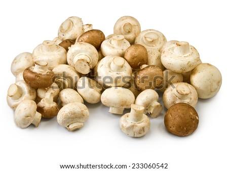 Isolated image of many mushrooms on a white background closeup - stock photo