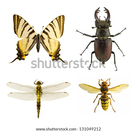 isolated insects - stock photo