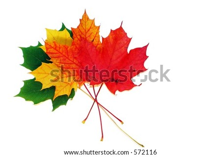 Isolated leaves - stock photo