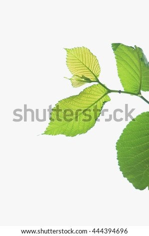Isolated leaves background