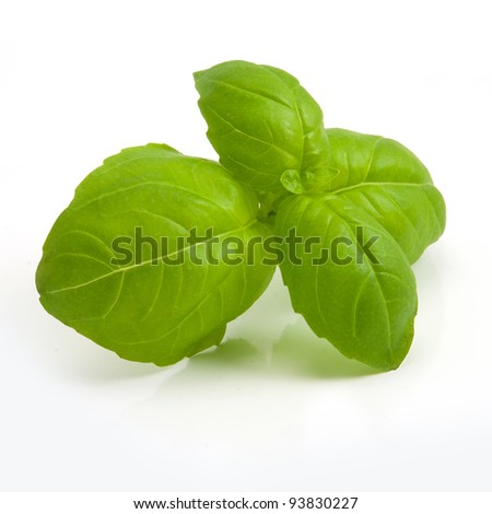 Isolated leaves of basil on white - stock photo