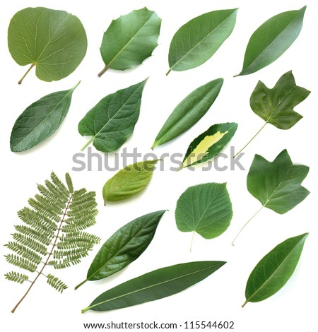Isolated leaves set - stock photo