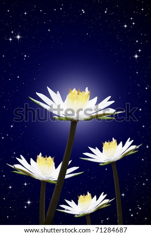 Isolated lotus white night sky background - stock photo