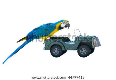 isolated macaw parrot on a toy car - stock photo