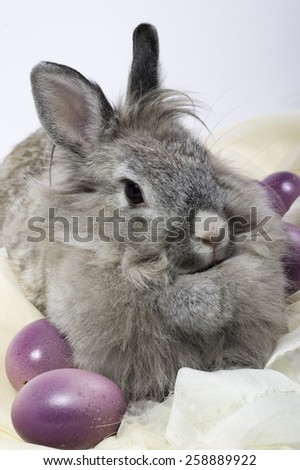 isolated of Easter bunny with Easter eggs on fabric
