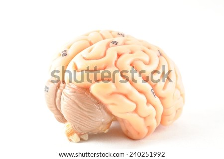 isolated of human brain