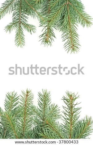 isolated on white background pine branches christmas motive