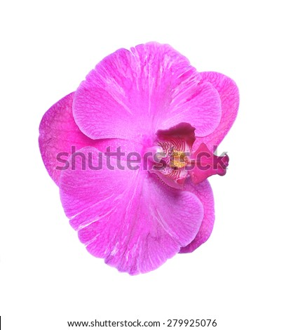 Isolated on white single romantic beautiful orchid flower - stock photo
