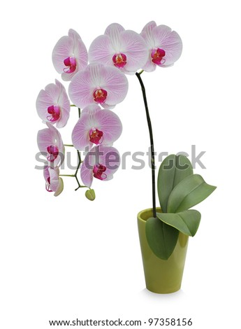 Isolated orchid on a green porcelain pot - stock photo