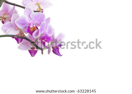 Isolated orchid on white background as template for spa, wellness and beauty publications - stock photo