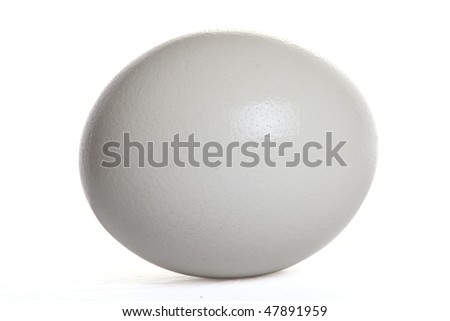 Isolated ostrich egg - stock photo