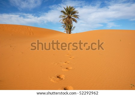 Isolated palm tree and footsteps in the dunes - stock photo