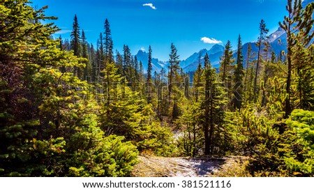 Isolated Peak and surrounding mountains and forests in Yoho National Park in the Rocky Mountains in British Columbia, Canada. - stock photo