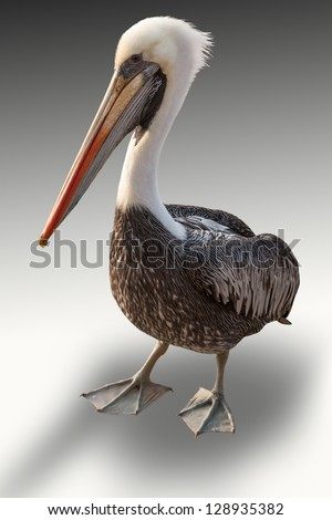 Isolated pelican easy to cut - stock photo