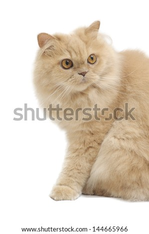 Isolated persian cat on white background - stock photo
