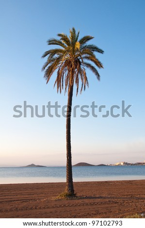 isolated picture of a palm tree located in Playa Paraiso in La Manga del Mar Menor (Murcia)