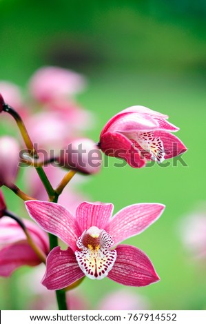 Isolated pink orchid flowers on green background