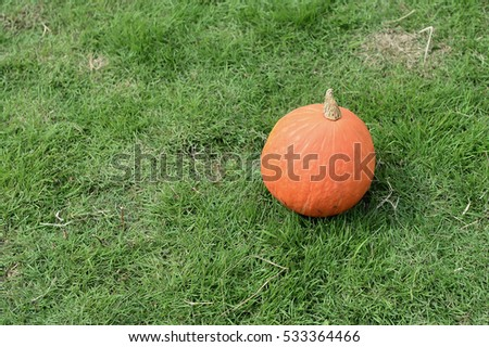 isolated pumpkin  in green garden.