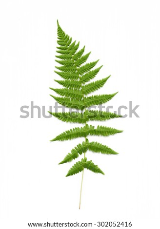 Isolated scan of fern plant - stock photo