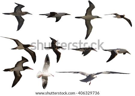 isolated seabirds - stock photo