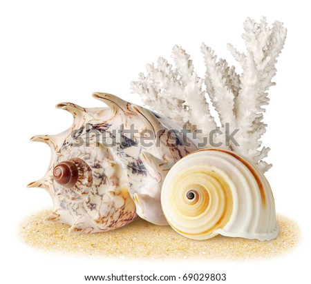 Isolated shells. Coral and two sea shell on a sand isolated on white background