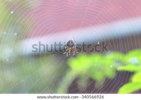 Isolated tiny spider on the net.