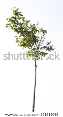 isolated tree - stock photo