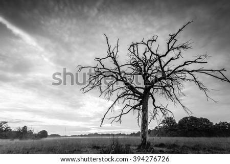 Isolated tree and sunrise - stock photo