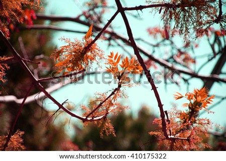 isolated tree branches and autumn sepia foliage leaf with blue sky - stock photo