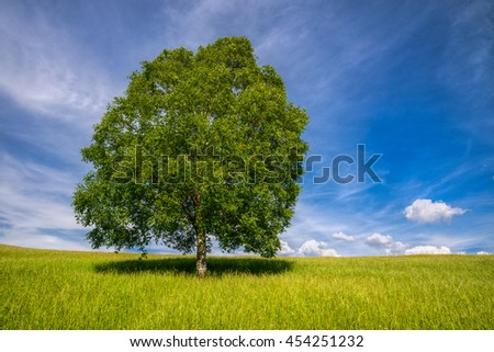 Isolated tree in a meadow under a blue sky in Incio, Lugo, Galicia - stock photo