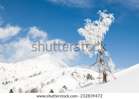 Isolated tree in a snow background