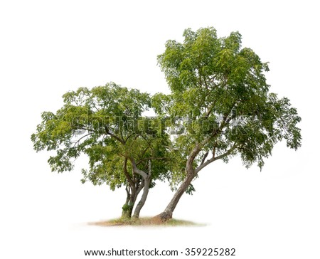 Isolated trees on white background - stock photo