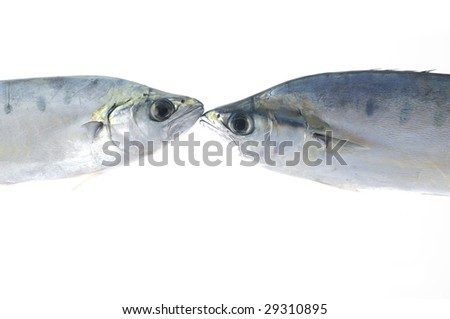 Isolated two pacific fresh fish