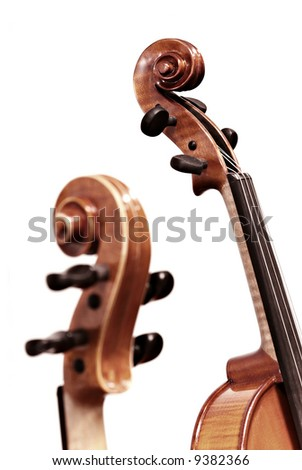 isolated violins on white background