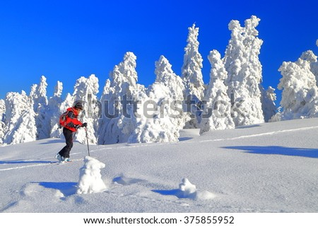 Isolated woman ascending on touring skis near snow covered trees  - stock photo