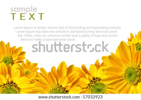 Isolated yellow flowers with copy space - stock photo