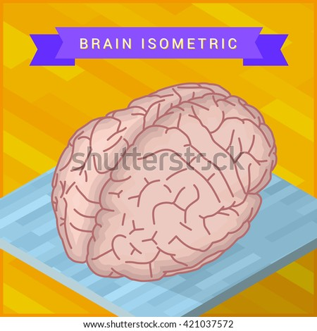 isometric view of human brain flat icon. Pictogram of human brain. Human ogran sign. - stock photo