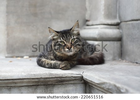 Istanbul white and grey cat - stock photo