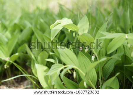 It is a roundworm leaf, and young leaves and rootstocks can be eaten in spring