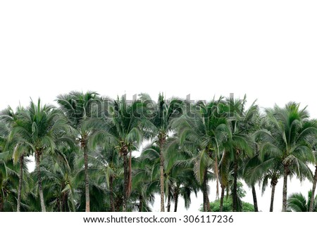 It is Coconut palm with white sky for pattern. - stock photo